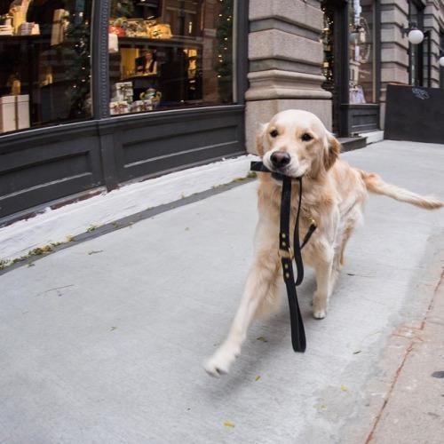 I cani non sono più quelli di unavolta.